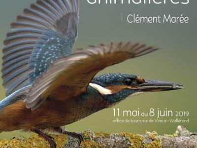 Exposition : Photographies animalières