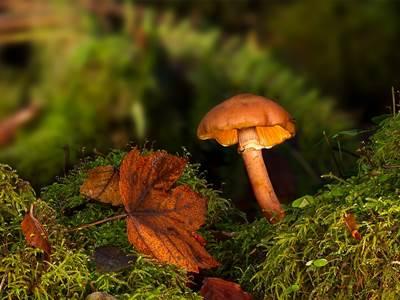 Sortie nature : Les champignons du Bois de Foisches