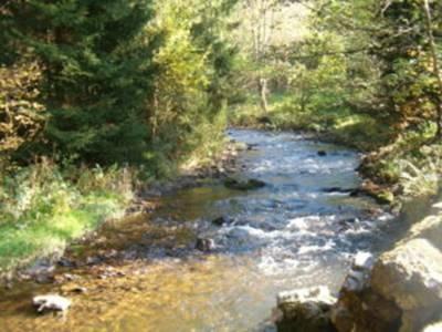 Une zone humide, une forêt... une rivière