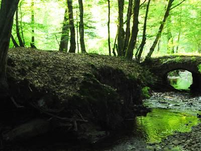 Le Bois des Douze-Cent, la Nature aux mille merveilles !