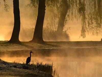 Sortie nature, jeu de piste : Les oiseaux de la forêt
