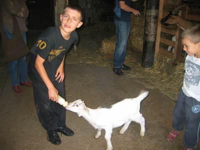 """""""Fromage de chèvre"""" à la ferme pédagogique de Liart"""