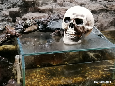 Halloween au Domaine de Vendresse
