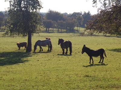Boucle à cheval autour de Rocquigny