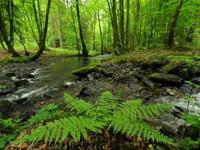 Le cœur vert de l'Ardenne (Gp)