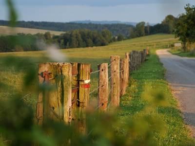 Bois de La Garenne, la clé des champs