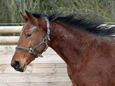 Concours d'élevage de chevaux