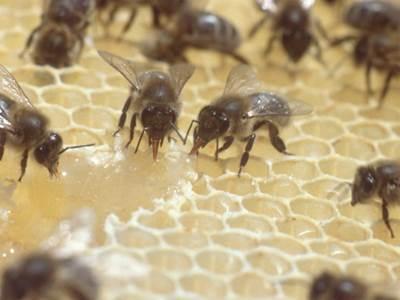 Visite au coeur de la ruche