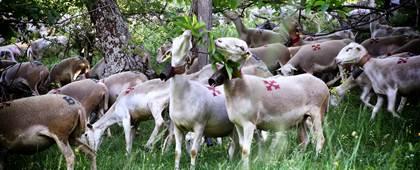 Ballade Photo Pastorale