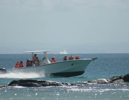 bateau de l'hotel  Libertalia 3 ( retour de sortie )