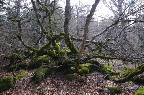 Forêt souche mousse © Martine Pialot