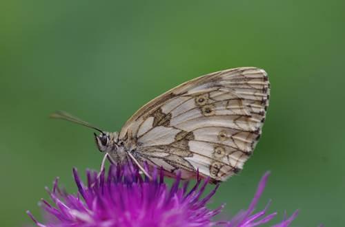 Papillon © Martine Pialot
