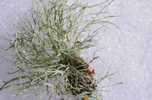 lichens dans les bois © Martine Pialot