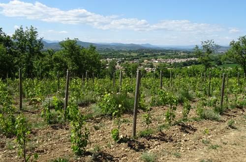Vigne © JF RAULET Communauté de communes Cèze Cévennes