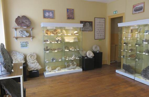salle fossiles du monde
