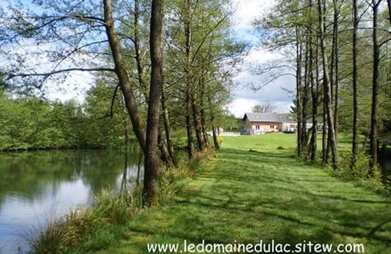 Forêt près du lac