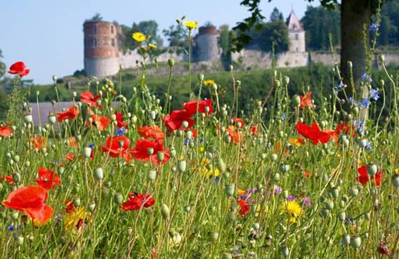 Le château de Hierges