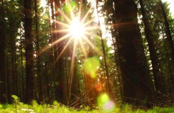 Nature forêt verdure