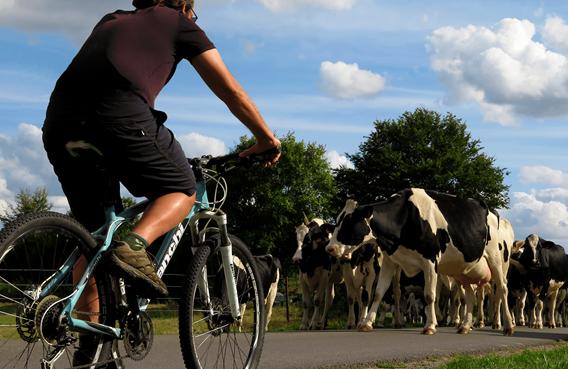 les vélos de pierrot
