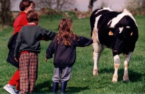 animaux de la ferme pédagogique