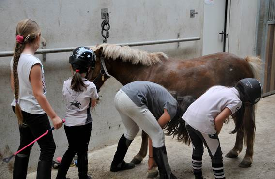 préparation du poneys