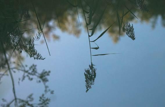 Sortie nature : La Réserve Naturelle Régionale de Bois en Val, un réservoir de Biodiversité en ville