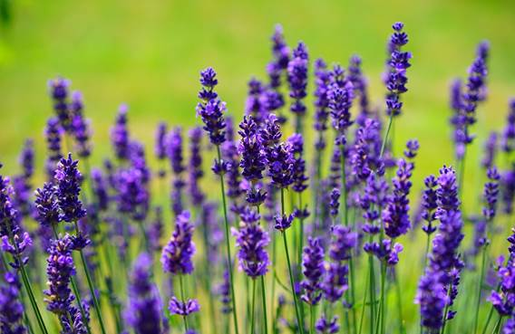 Sortie nature: Plantes médicinales