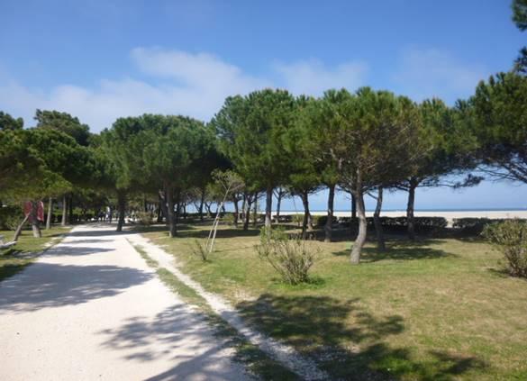 Promenade sous les pins le long de la plage d'Argelès