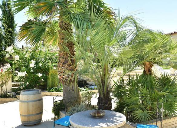 casadina-guesthouse-palmtrees-sommieres