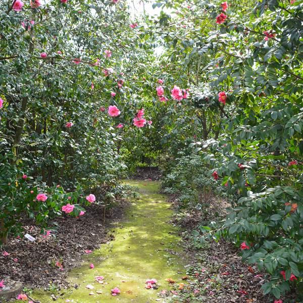 Balade au parc floral des Camellias de la Prairie