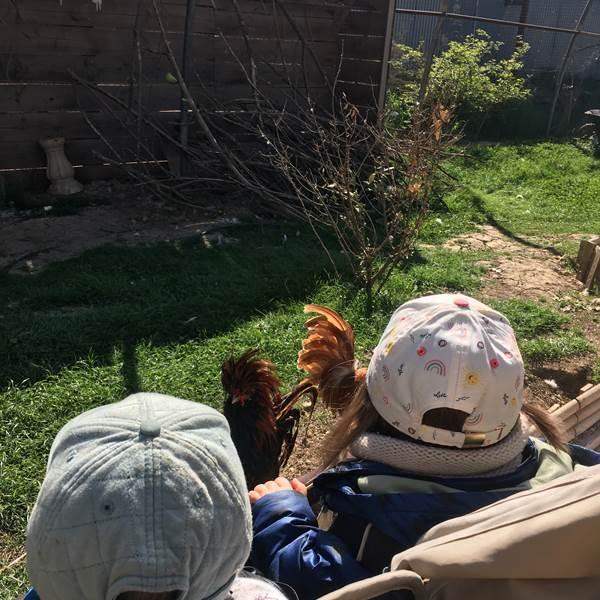 Une matinée à la ferme pédagogique de Rousson
