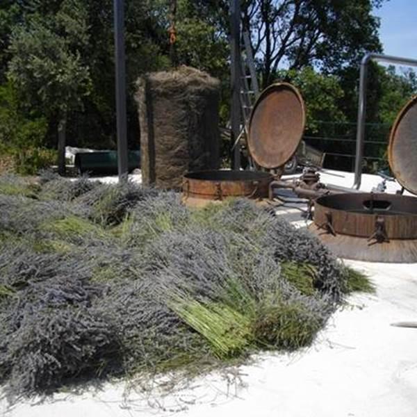 Ateliers découverte et visites à la Distillerie Bel Air