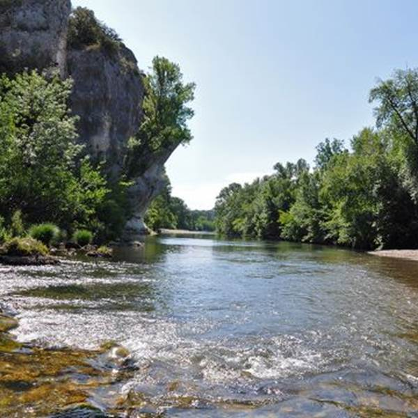 A la découverte des arbres de nos rivières