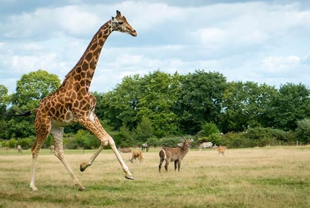Branféré parc animalier et Botanique - Parcabout
