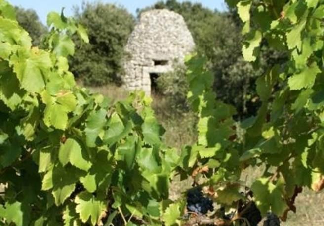Balade vintage au coeur des vignobles d'Uzès