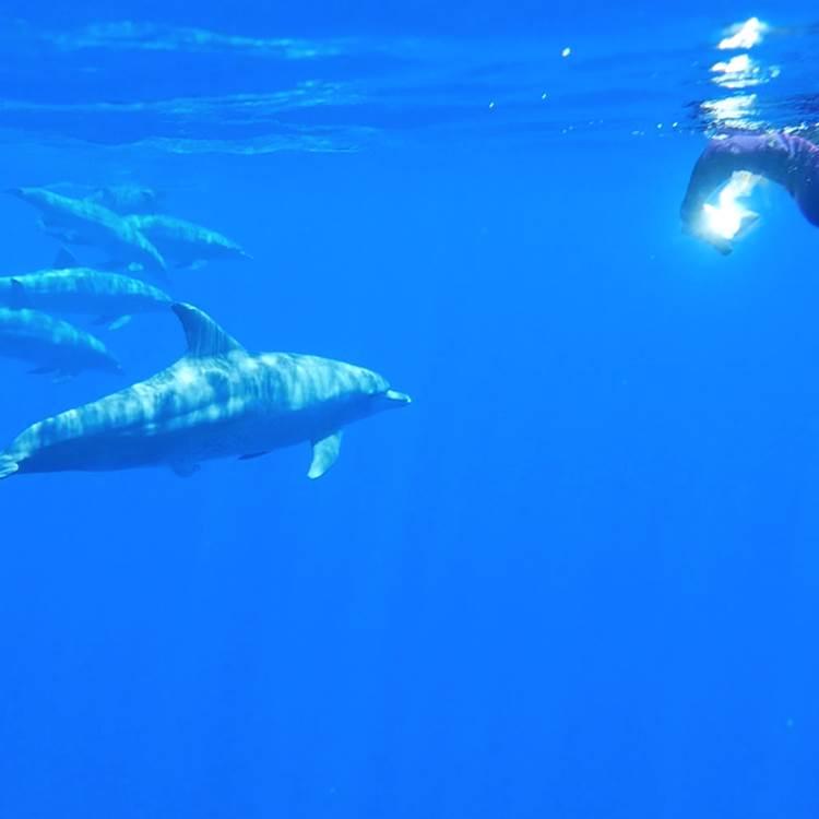 nager avec les cetacés