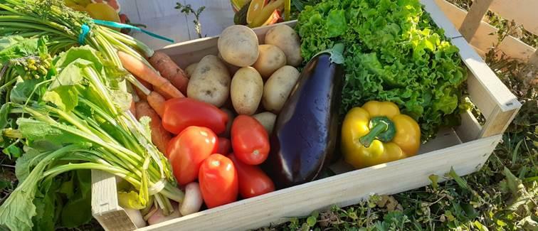 Domaine du Gué du Roi Panier Légumes