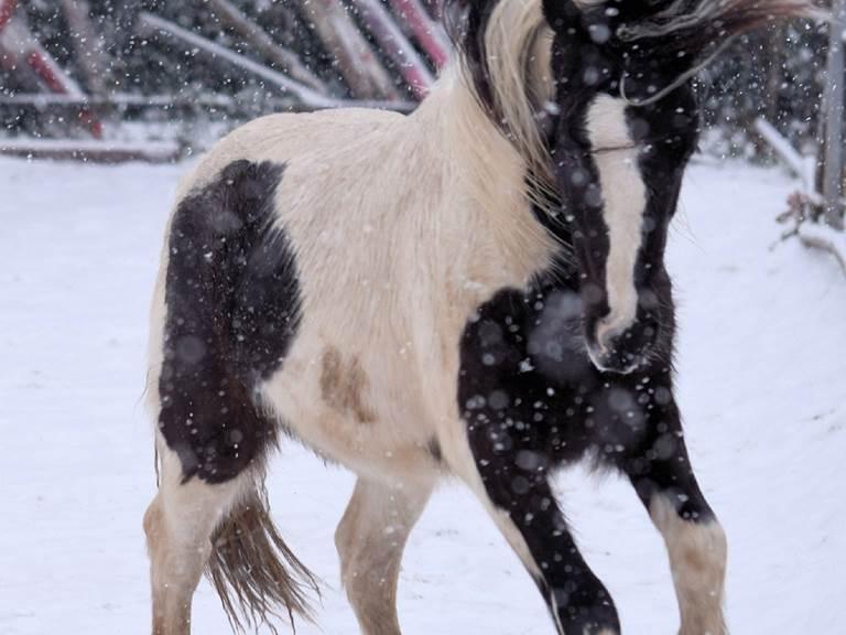 horse-4408762_1920