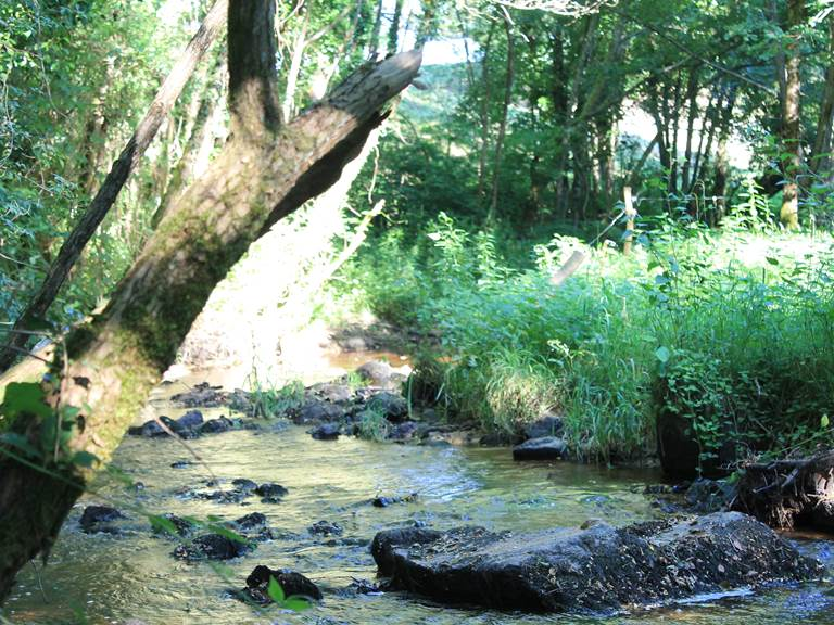 rivière etoileperchee