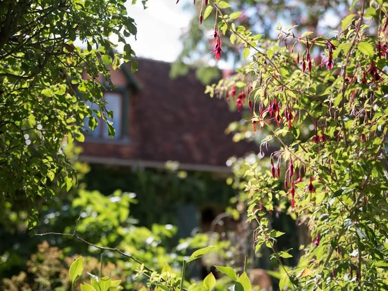 fleurs rouge maison arriere plan