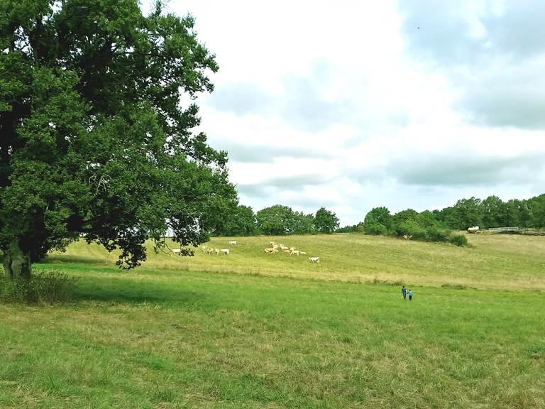 Domaine des Cyclamens, vaches et chênes séculaires
