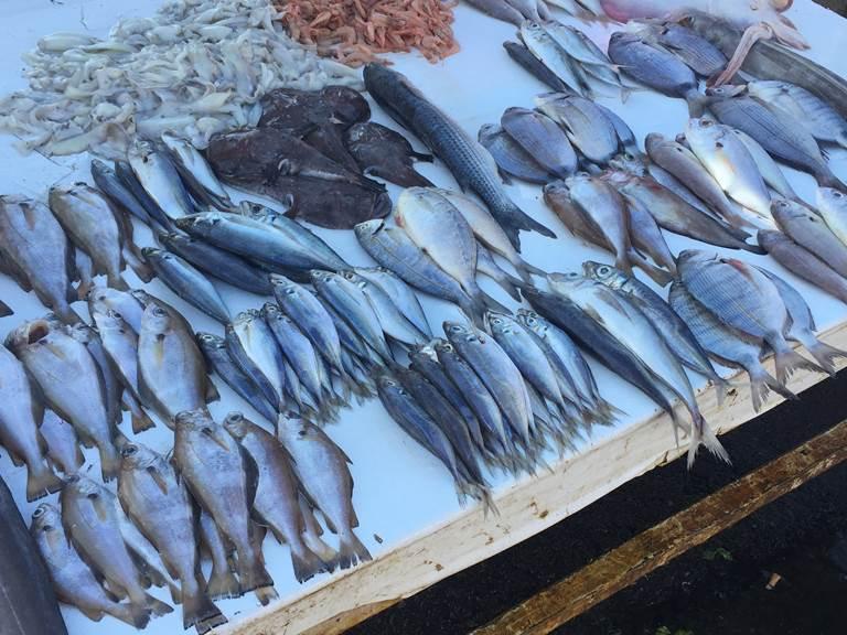 étales de poissons au port