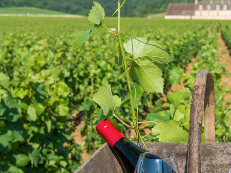 vignobles de Vézelay