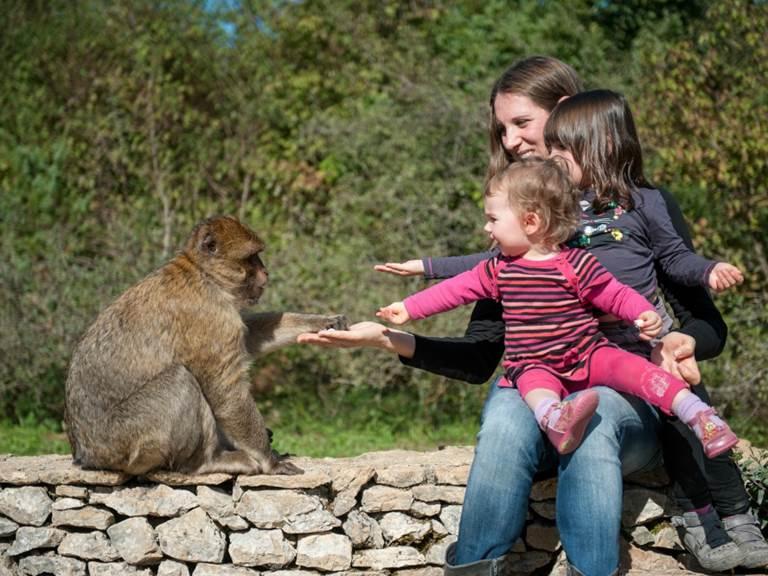 LOI-foret-des-singes--3-