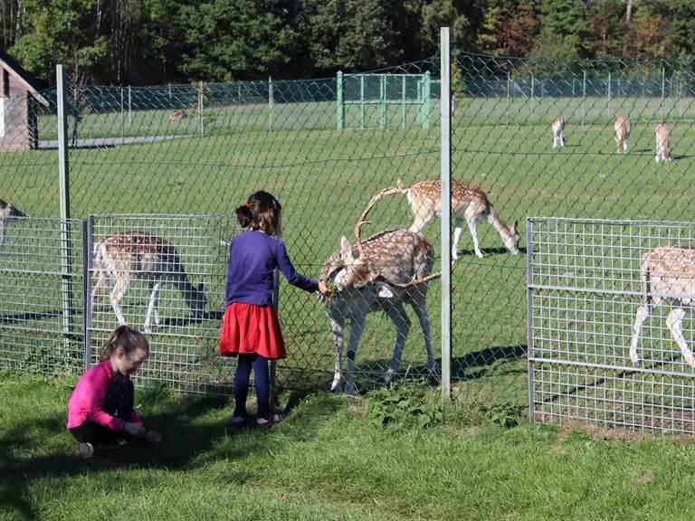 Les enfants adorent et les animaux, et la plaine de jeux