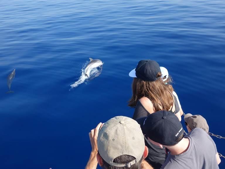 dauphins depuis bato