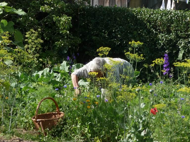 Cueillette au jardin