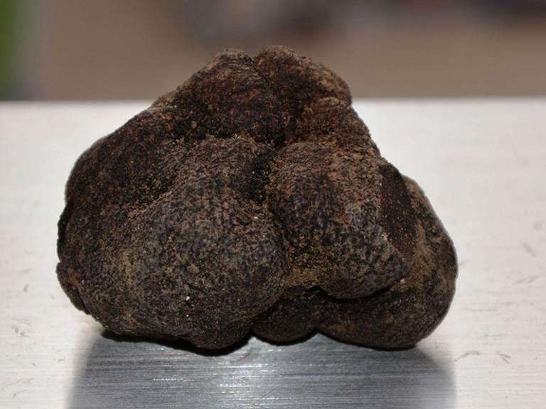 marche-aux-truffes-2
