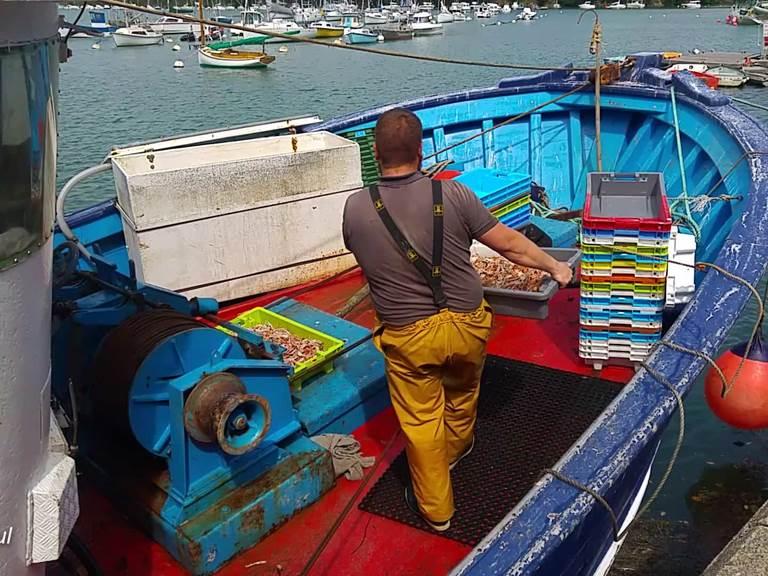Débarquement de langoustines sur le port de Bélon à Moelan sur mer