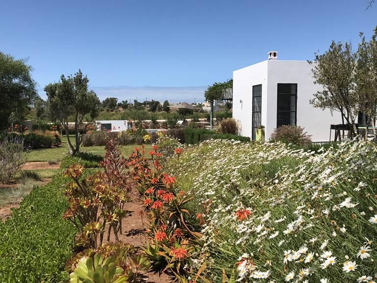 dar Céleste -Essaouira - jardin